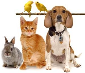 Many-Pet-