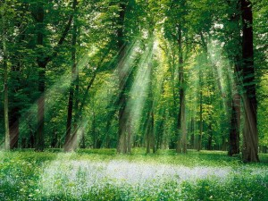 sunrays-in-green-forest